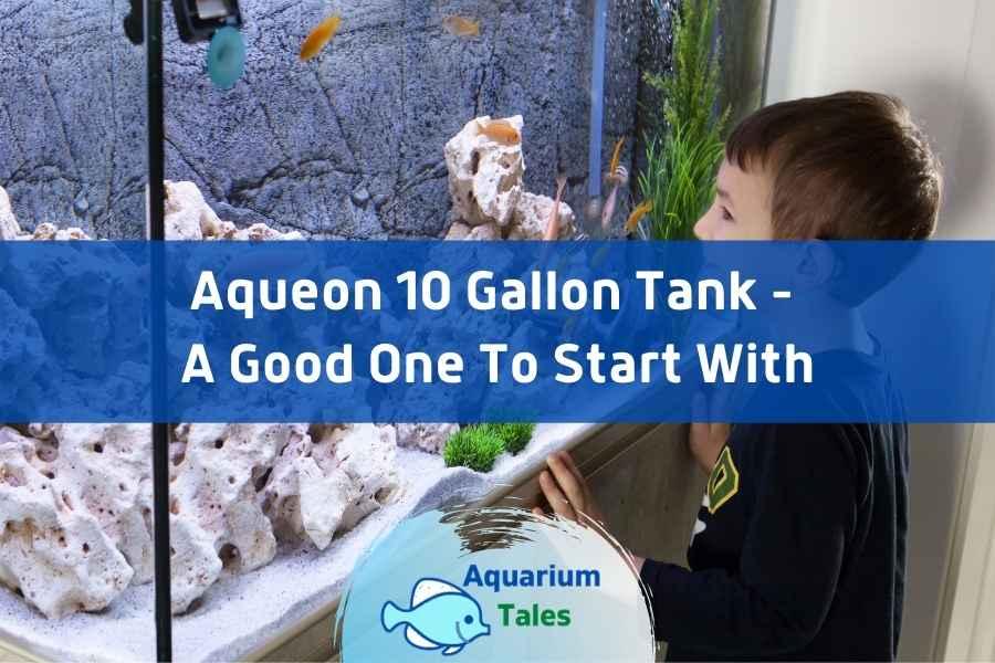 Aqueon 10 gallon tank Review by Aquarium Tales