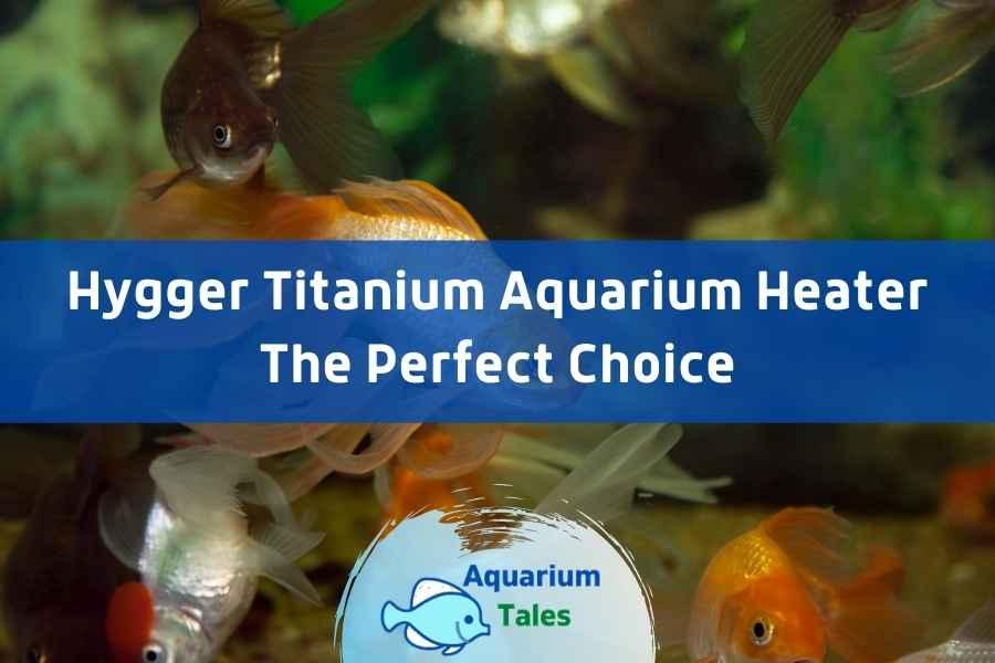 Hygger Titanium Aquarium Heater Review by Aquarium Tales