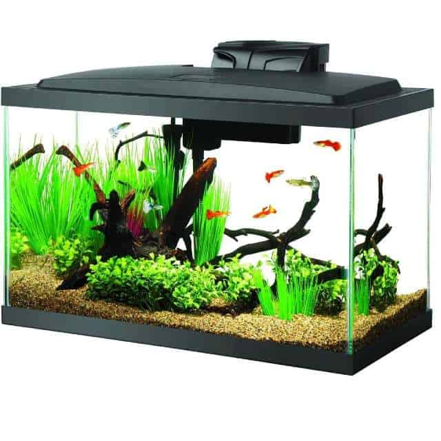 Aqueon 10 Gallon Tank – A Good One to Start With