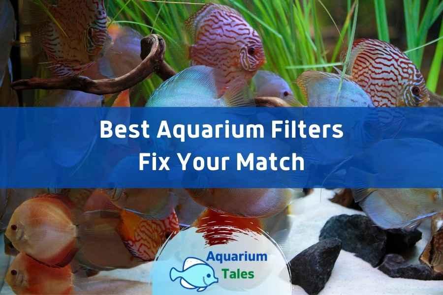 Best Aquarium Filter Review by Aquarium Tales
