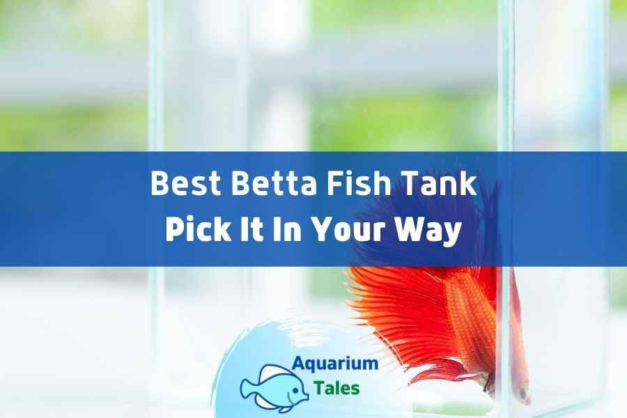 Best Betta Fish Tank Review by Aquarium Tales
