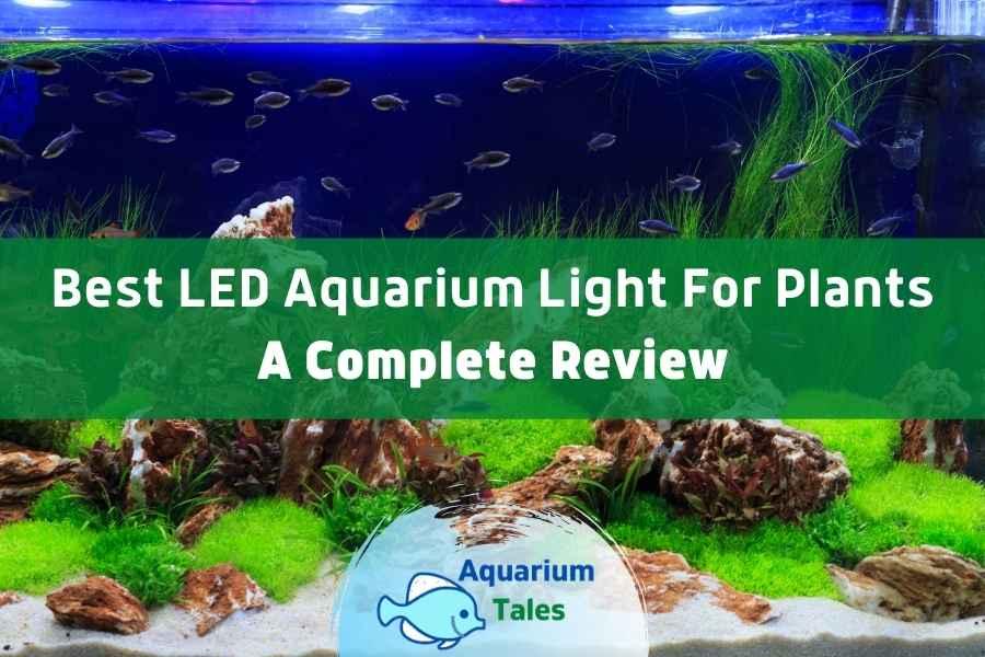 Best LED Aquarium Light for Plants Review by Aquarium Tales