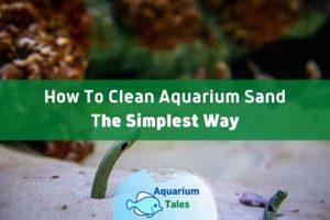 How to Clean Aquarium Sand by Aquarium Tales