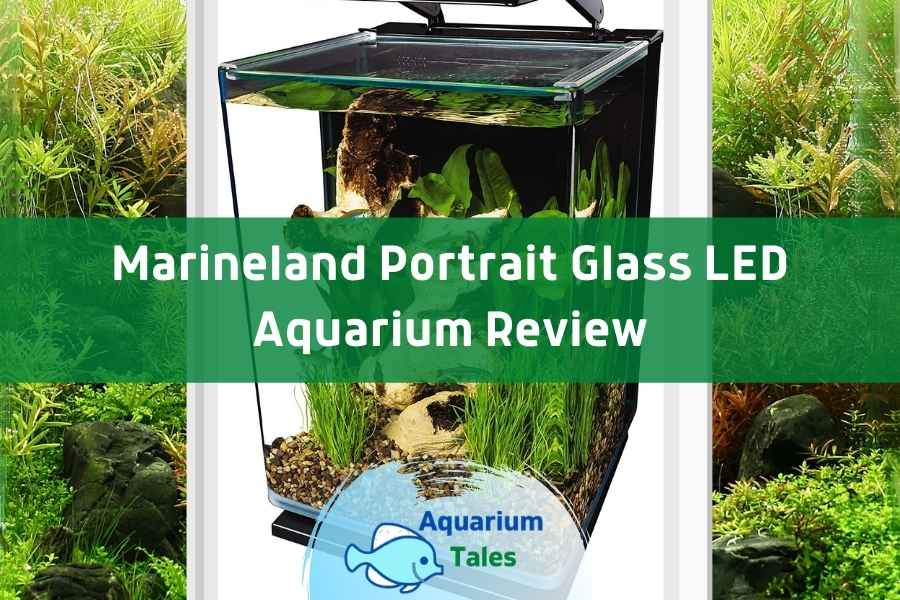 Marineland Portrait Glass LED Aquarium Review by Aquarium Tales