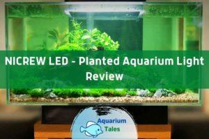 NICREW LED Light Review by Aquarium Tales