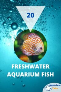 best freshwater aquarium fish