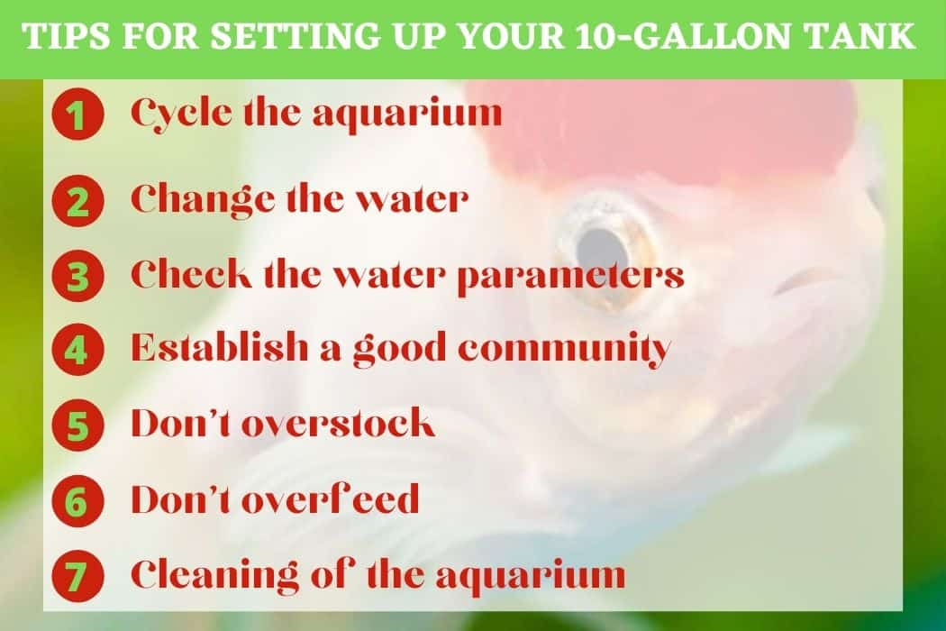 7 Tips for Setting up your 10-gallon tank