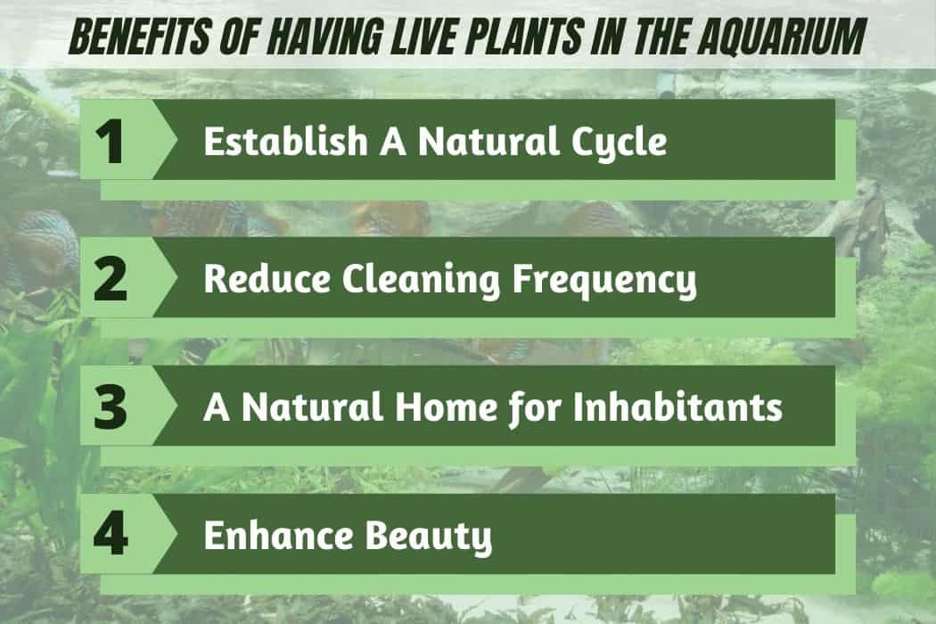 Benefits of Having Nitrate Reducing Live Plants in the Aquarium