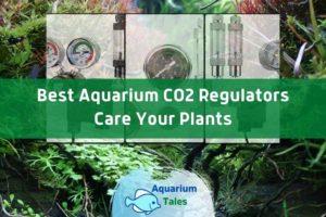 Best Aquarium CO2 Regulators Review by Aquarium Tales