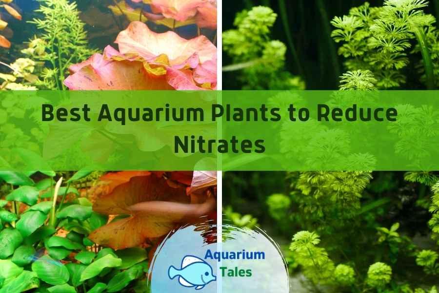 Best Aquarium Plants to Reduce Nitrates by Aquarium Tales