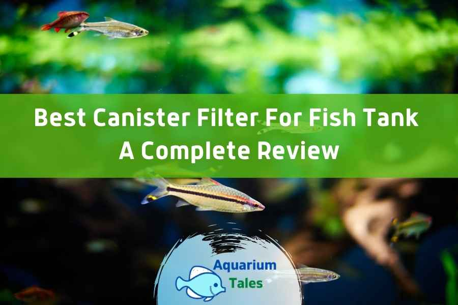 Best Canister Filter For Fish Tank Review by Aquarium Tales