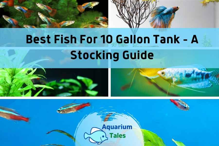 Best Fish For 10 Gallon Tank - A Stocking Guide by Aquarium Tales