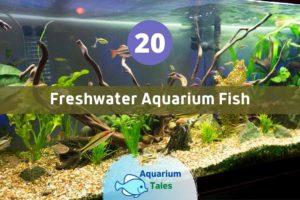 Best Freshwater Aquarium Fish by Aquarium Tales