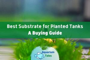 Best Substrate for Planted Tanks Review by Aquarium Tales