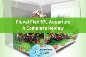 Fluval Flex 57L Aquarium Review by Aquarium Tales