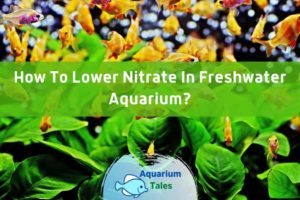 How To Lower Nitrate In Freshwater Aquarium by Aquarium Tales