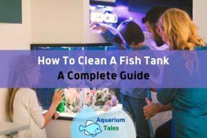 How to Clean a Fish Tank by Aquarium Tales