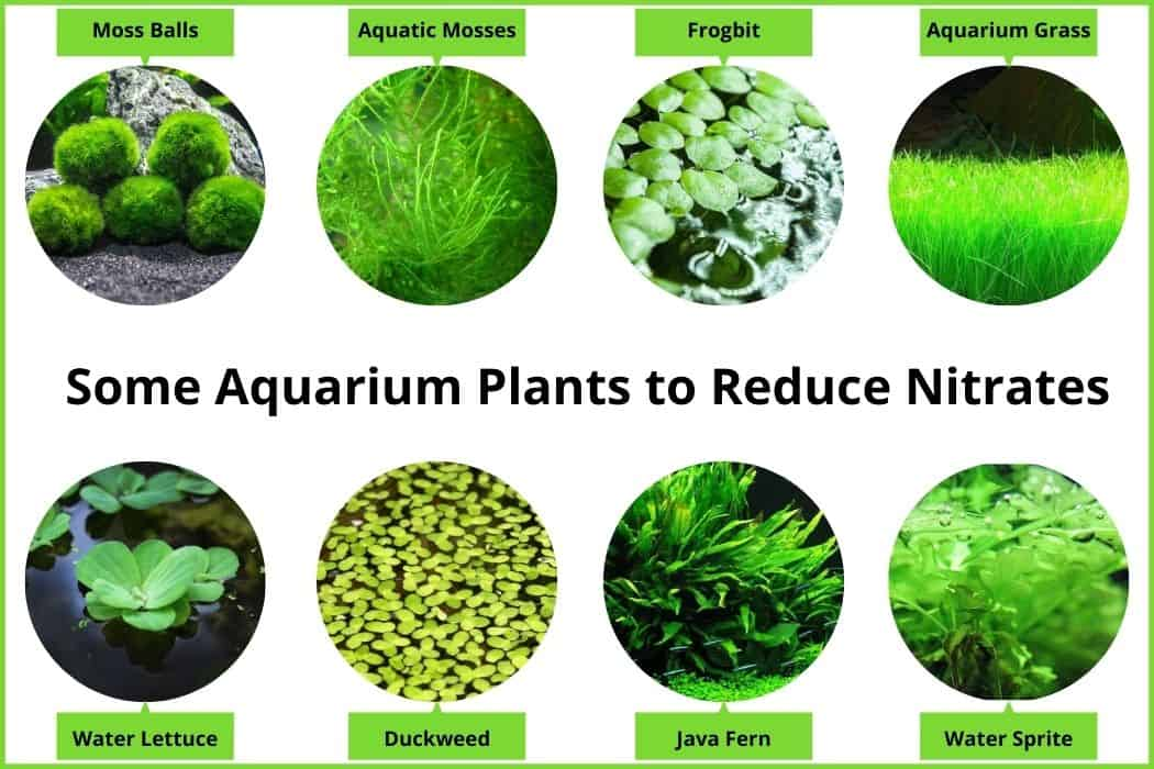 Some Aquarium Plants to Reduce Nitrates