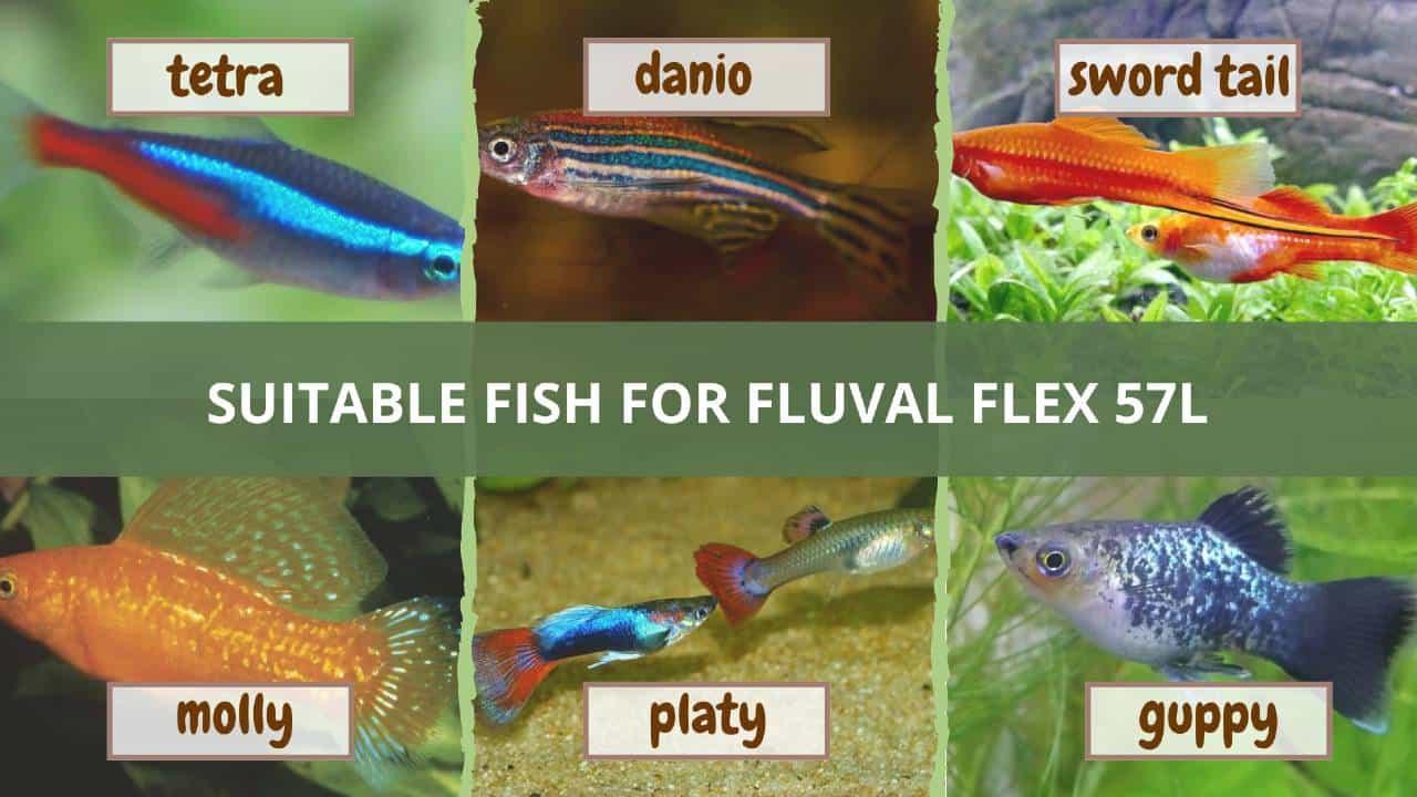 Suitable fish for fluval flex 57l aquarium
