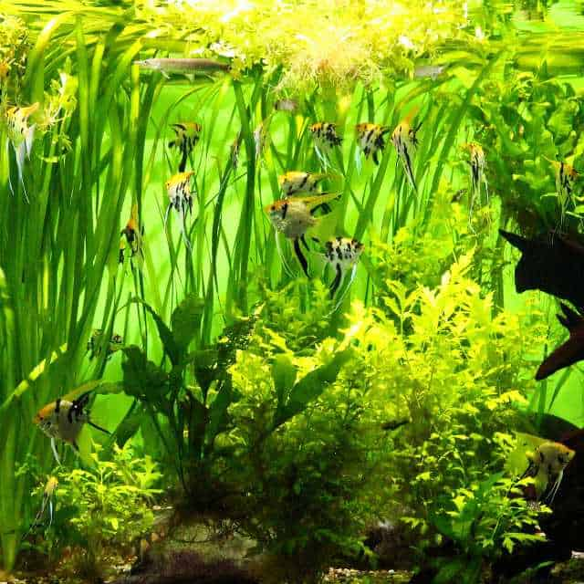 best aquarium plants to reduce nitrates