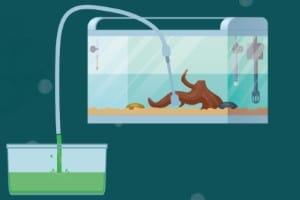 cleaning aquarium substrate step-2