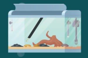 cleaning aquarium substrate step-3
