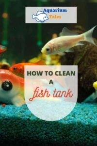 how to clean a fish tank tips