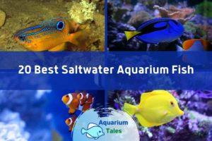 20 Best Saltwater Aquarium Fish by Aquarium Tales
