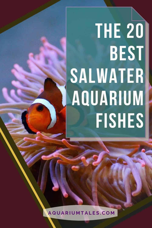 20 best saltwater aquarium fishes for beginners