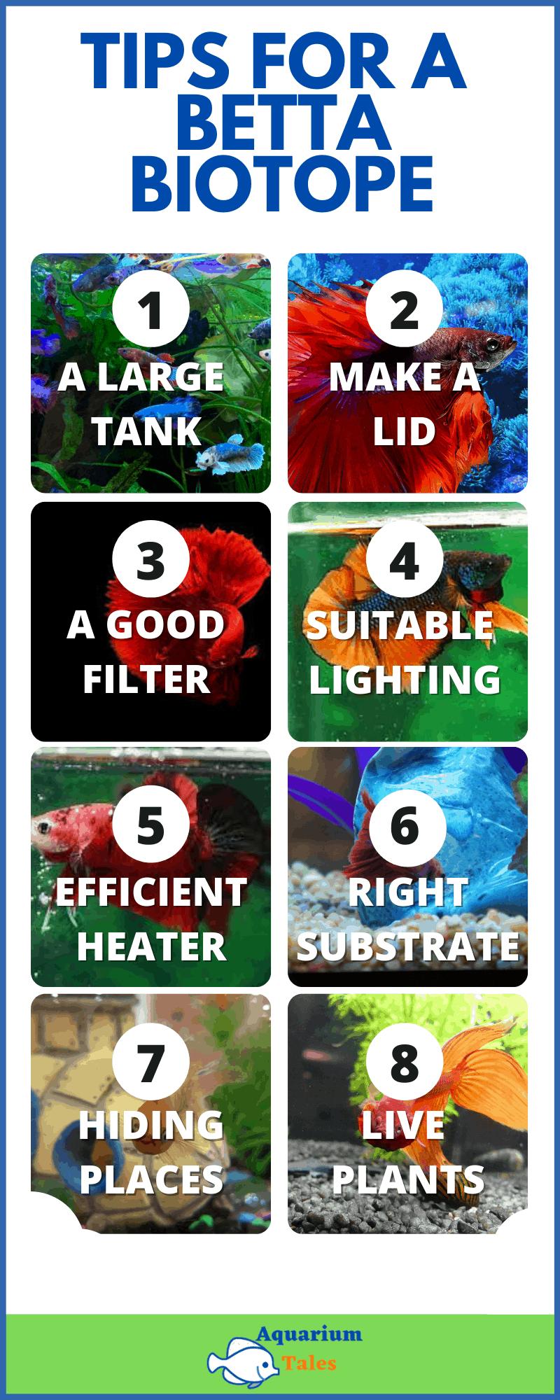 Betta biotope aquarium setup guide