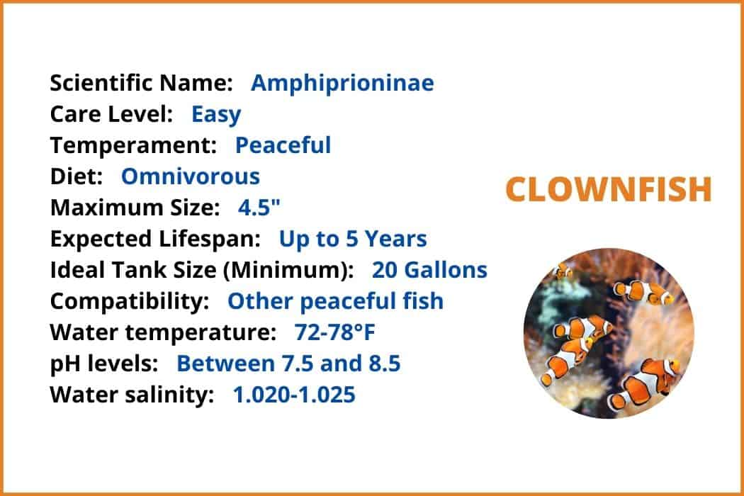 Details about Clownfish In Summary