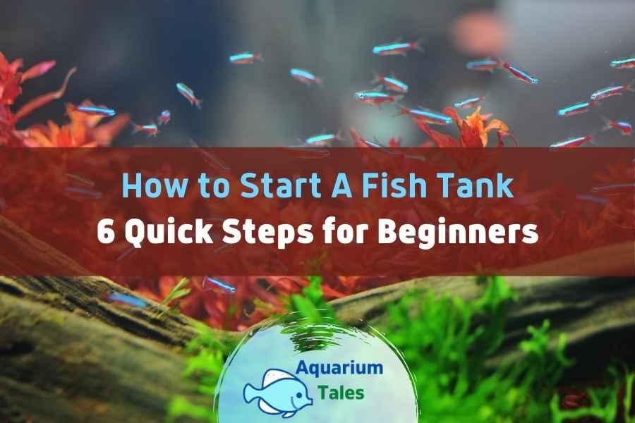How to Start A Fish Tank by Aquarium Tales