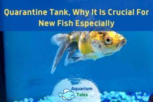 Quarantine Tank For Fish by Aquarium Tales