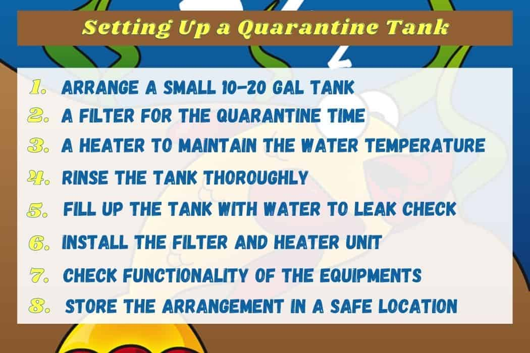 Setting Up a Quarantine Tank Steps