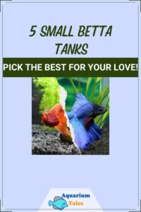 Small Betta Tank review