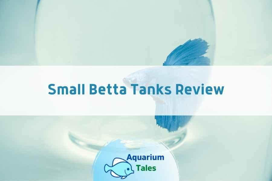 Small Betta Tanks Review by Aquarium Tales