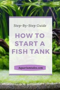 how to start a fish tank