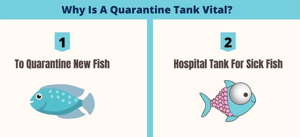 Why Is A Quarantine Tank Vital_