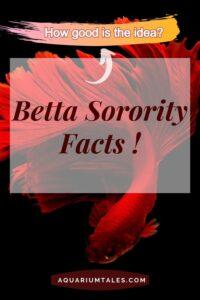 betta sorority tank - know the facts