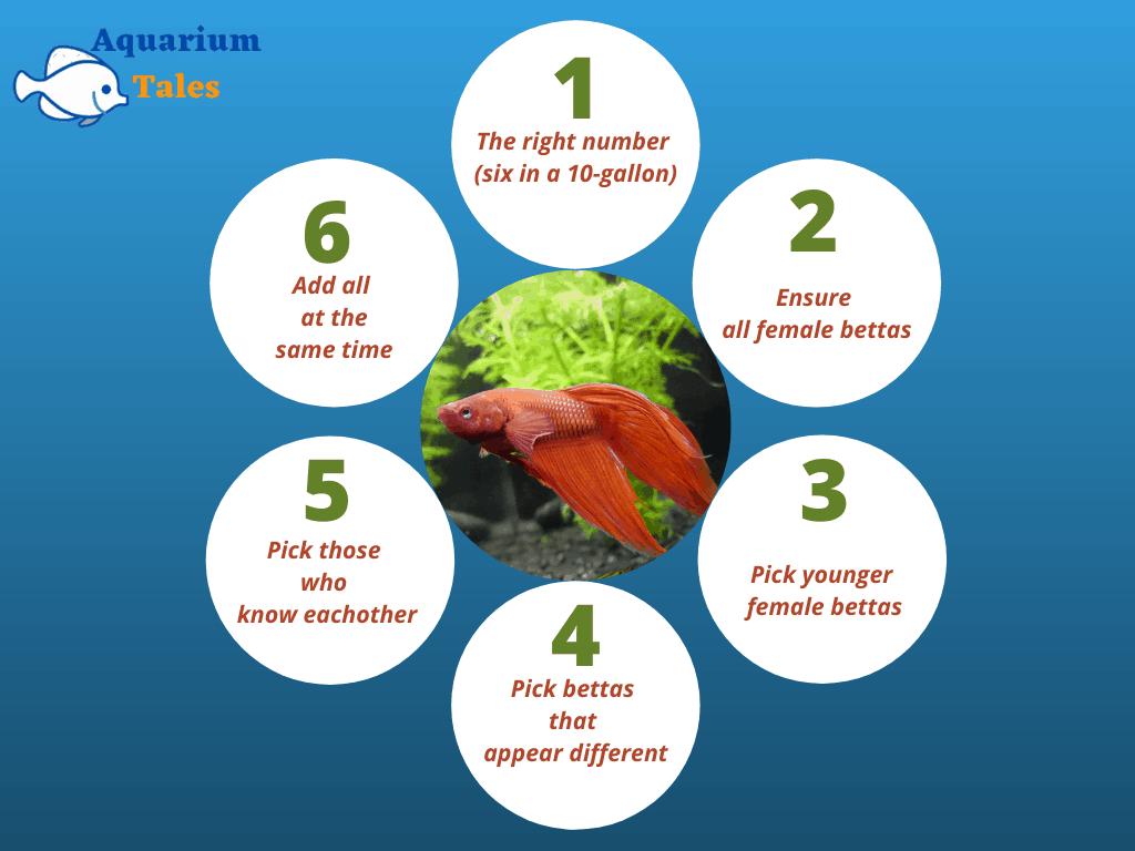 betta sorority tips (6 tips)