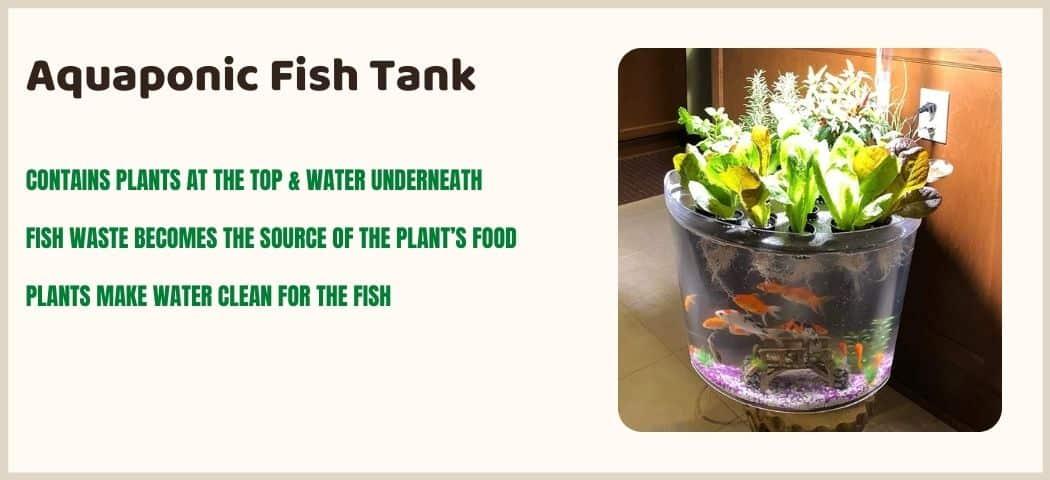 Aquaponic Fish Tank Aquarium As A Self Cleaning Tank