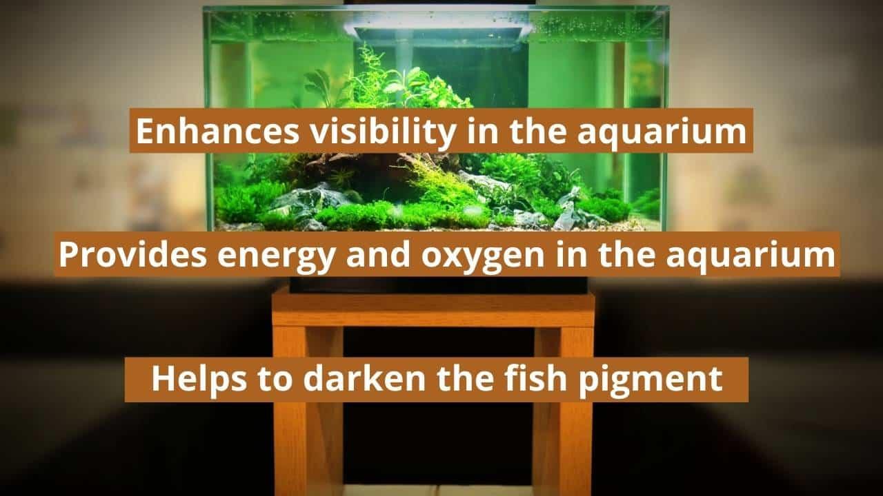 Benefits of Light at Night in the Aquarium