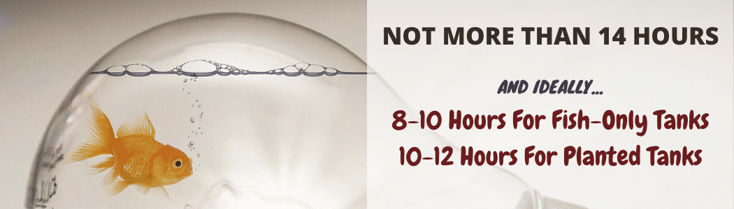 How Long Should Aquarium Lights Be On Ideally