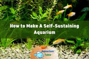 How to Make A Self-Sustaining Aquarium by Aquarium Tales