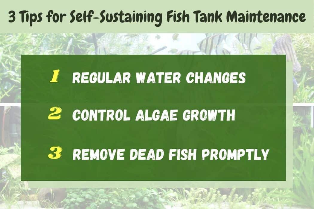 Self-Sustaining Fish Tank Maintenance Tips