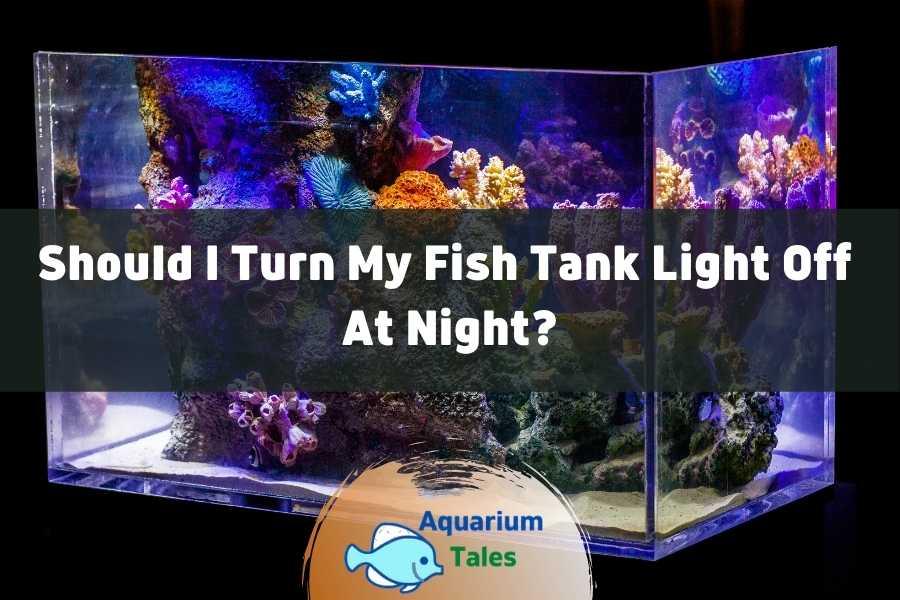 Should I Turn My Fish Tank Light off at Night by Aquarium Tales