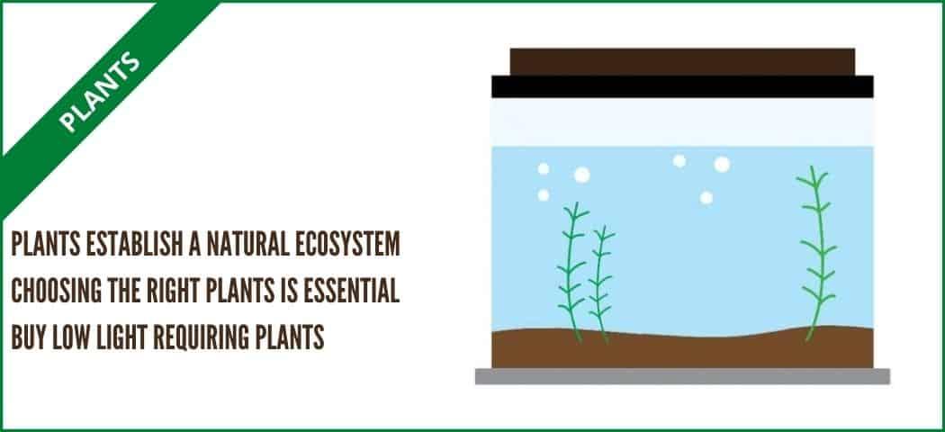 live plants for self sustaining tank (aquarium tales)