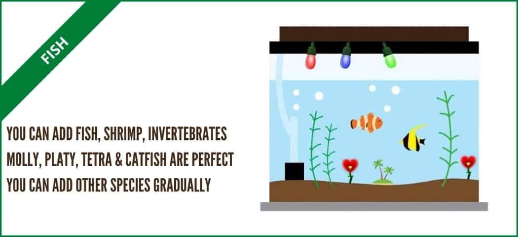 self sustaining aquarium with fish (aquarium tales)