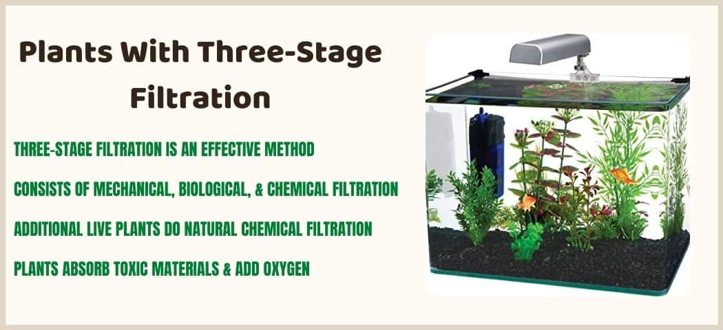three-stage filtration with plants as a self sustaining aquarium