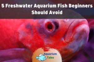 5 Freshwater Aquarium Fish Beginners Should Avoid by Aquarium Tales